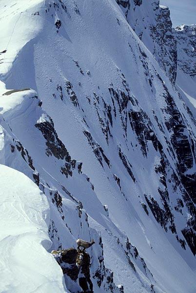 Sheep & Snowboarder, Mt. Athabasca, Alberta - Jonaven Moore