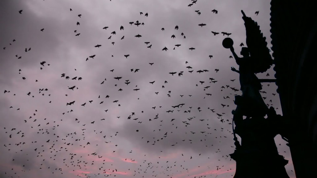 Winter Crows, video still, Dan Hudson